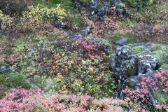 Autumn Colors, Þingvellir National Park
