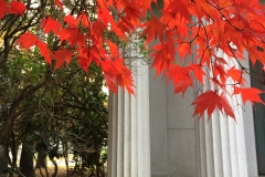 Maple and columns