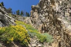 yellowstone- - 144