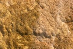 yellowstone- - 92